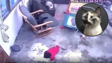 Photo of Gata salvó la vida de un bebé al evitar que cayera por unas escaleras en Bogotá