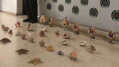 Photo of Decomisan caracoles y estrellas de mar listos para la venta