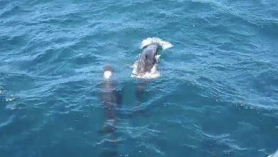 Photo of Avistamiento de ballenas en la Bahía de Santa Marta