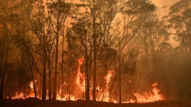 Photo of Incendios en Australia han arrasado con más de 5 millones de hectáreas de bosque