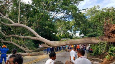 Photo of Árbol cayó, se trajo unos cables eléctricos ymató a un hombre en Guachaca