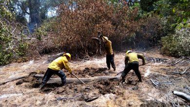 Photo of Controlado y liquidado incendio en el Vía Parque Isla de Salamanca en Magdalena