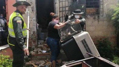 Photo of Rescatan en Barranquilla a dos perros encerrados por casi un año en una vivienda