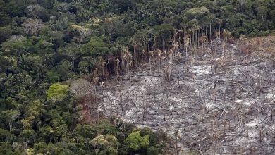 Photo of Colombia perdió 158.894 hectáreas de bosques en 2019 por la deforestación