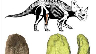 Photo of Descubren por primera vez cáncer en un fósil de dinosaurio
