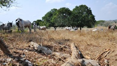 Photo of Ganaderos y agricultores del sur del Magdalena beneficiados con Banco de Maquinaria Verde
