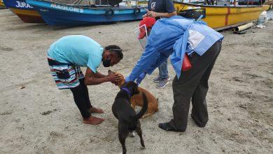 Photo of En cero se mantiene la transmisión de rabia por gatos y perros