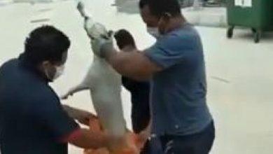 Photo of Abren investigación por maltrato a un perro en el Sena de Malambo, Atlántico
