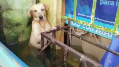 Photo of ¡En video! Rescatan a un perro en las inundaciones de Tabasco, México