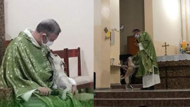 Photo of Sacerdote lleva perros callejeros a misa para que las personas los adopten