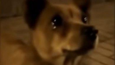 Photo of Perrito callejero llora al recibir alimento de un extraño