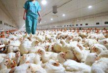 Photo of La OMS reporta el primer caso registrado de transmisión de influenza aviar H5N8 de aves ahumanoss