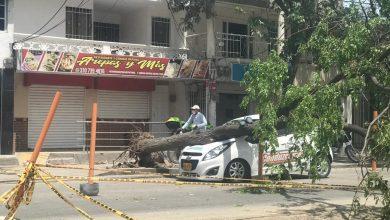Photo of Árbol cae sobre un vehículo de enseñanza tras fuertes vientos en Santa Marta
